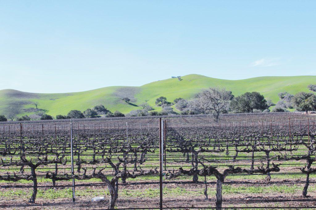 Kalifornia, winnice w rejonie Santa Ynez